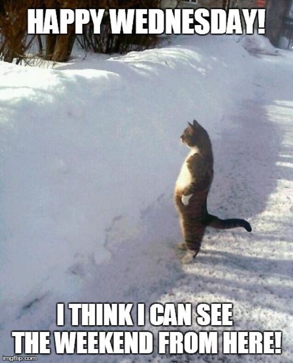cat looking for the weekend over a snow bank, hump day memes