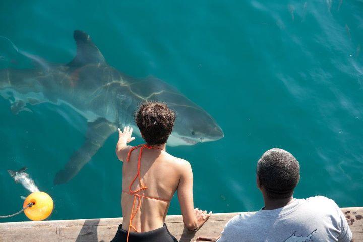 shark in dark tide