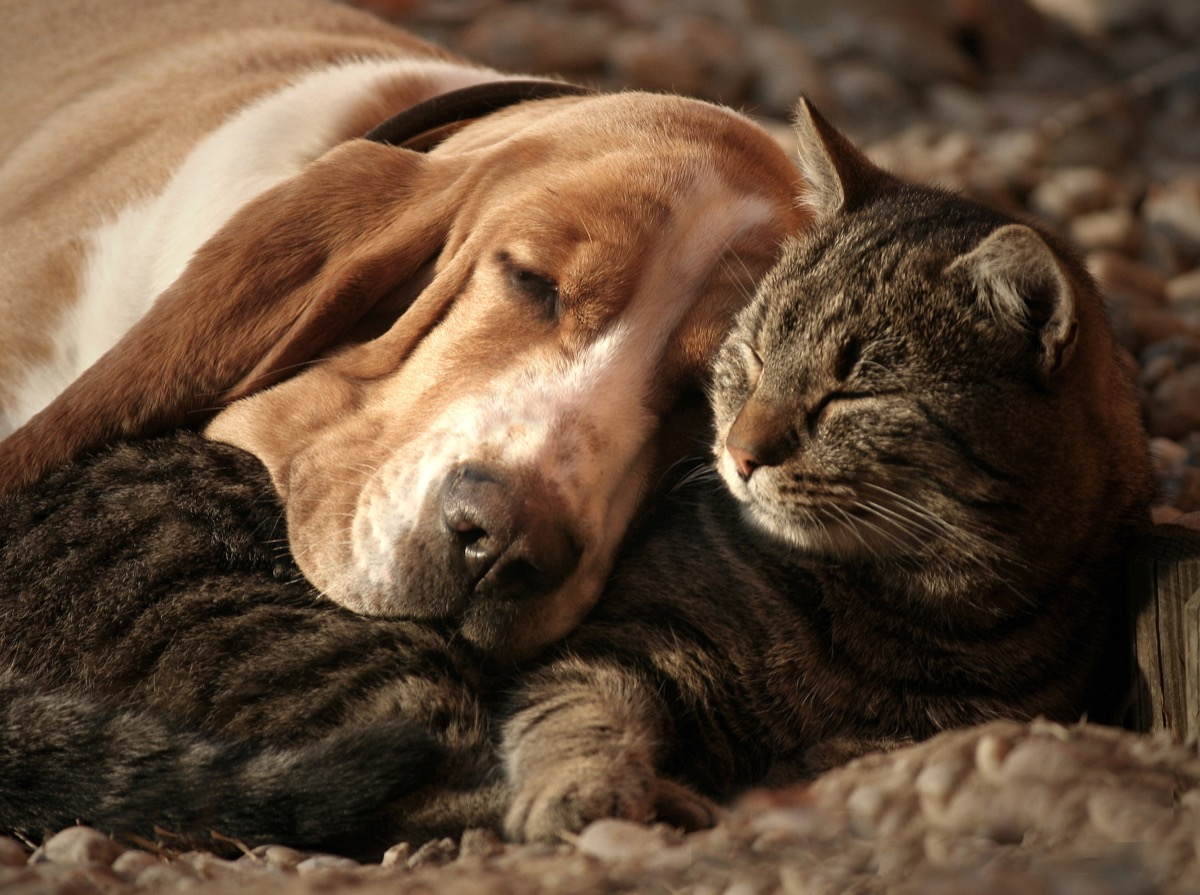 dog and cat in love animals in love