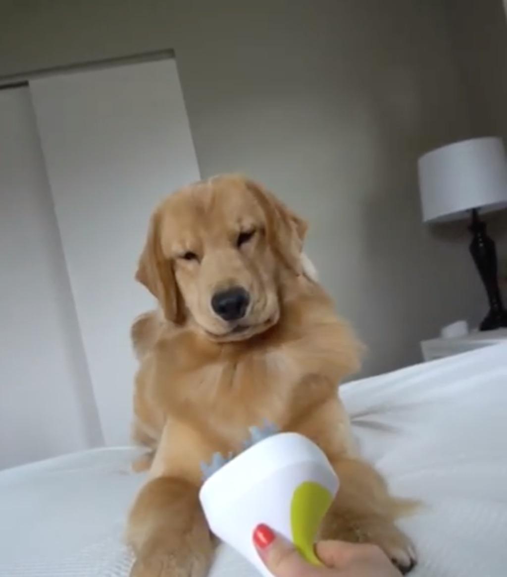 dog vs head massager