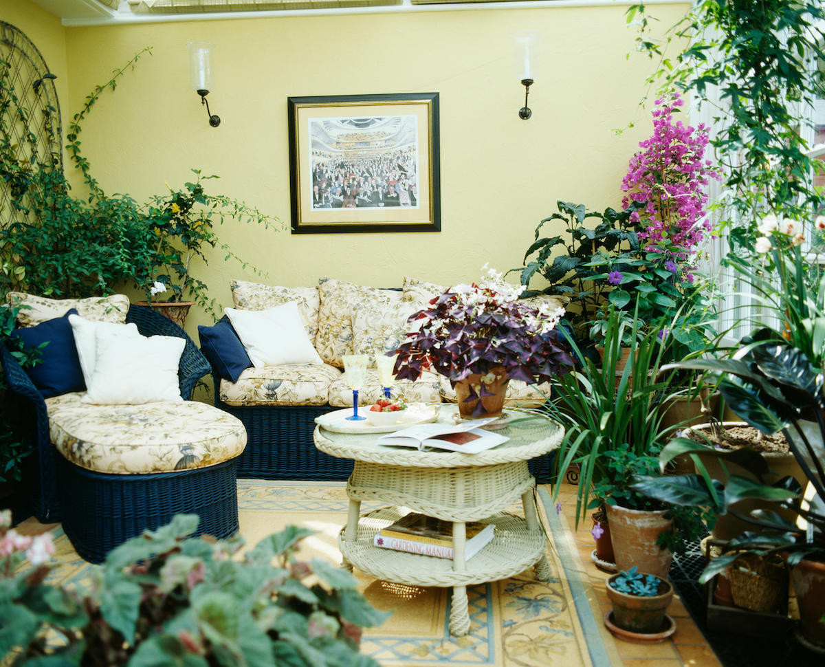 Lush green and flowering houseplants in conservatory living room with wicker furniture