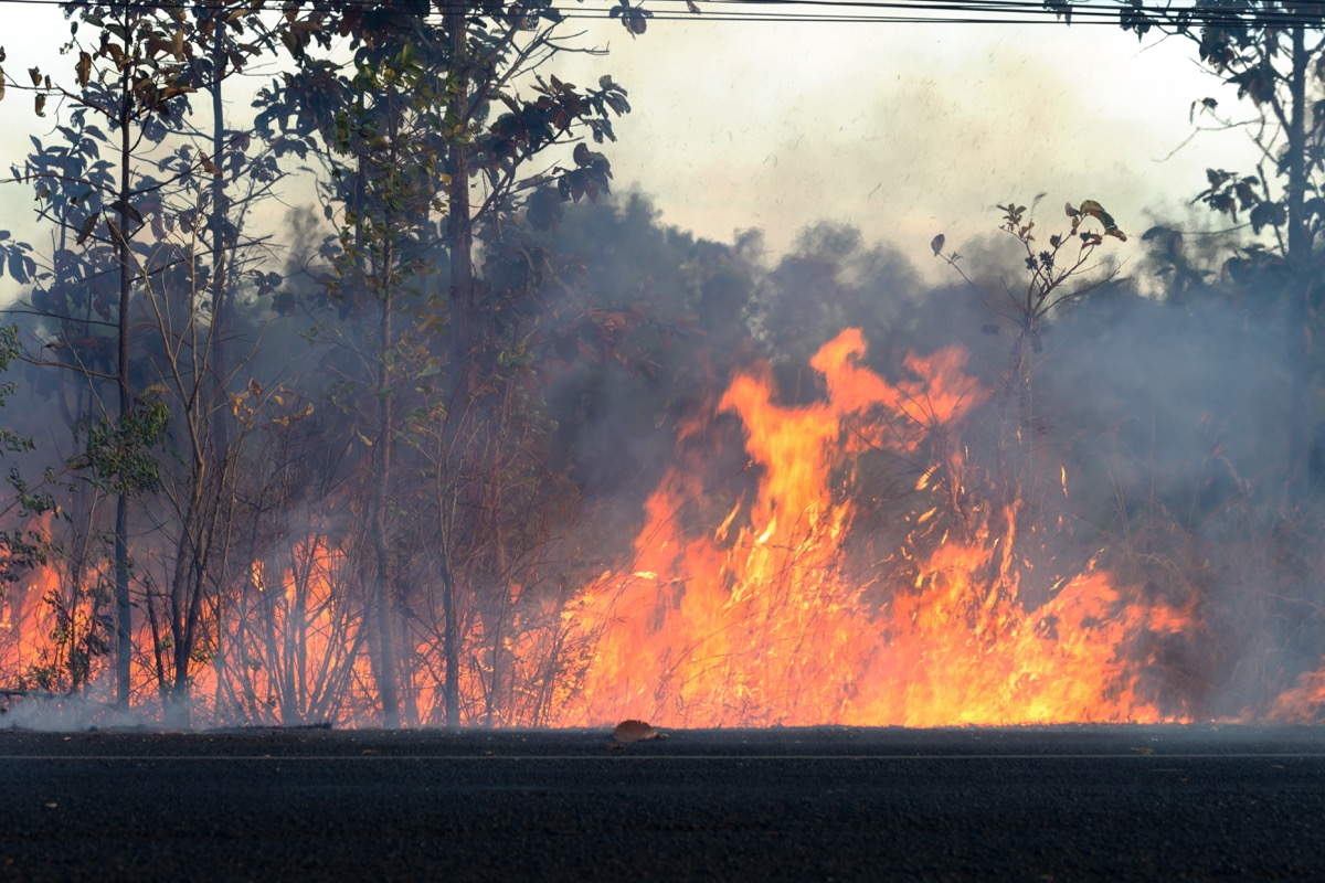 Forrest Fire Why Climate Change Matters