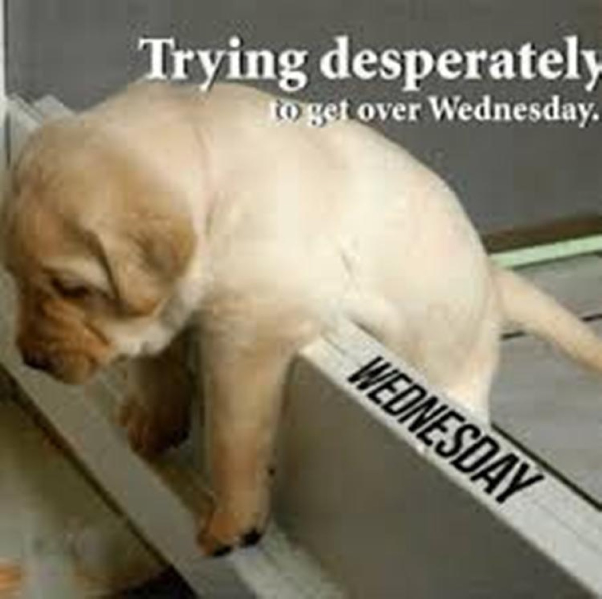 get over wednesday, hump day memes