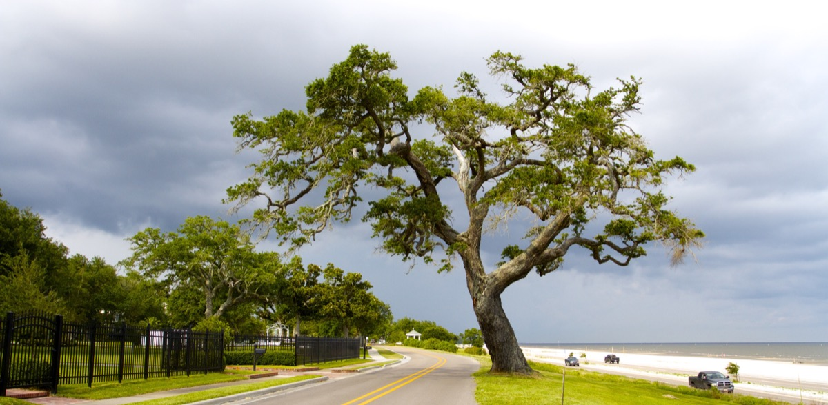 gulfport mississippi tree and highway, heart attack cities