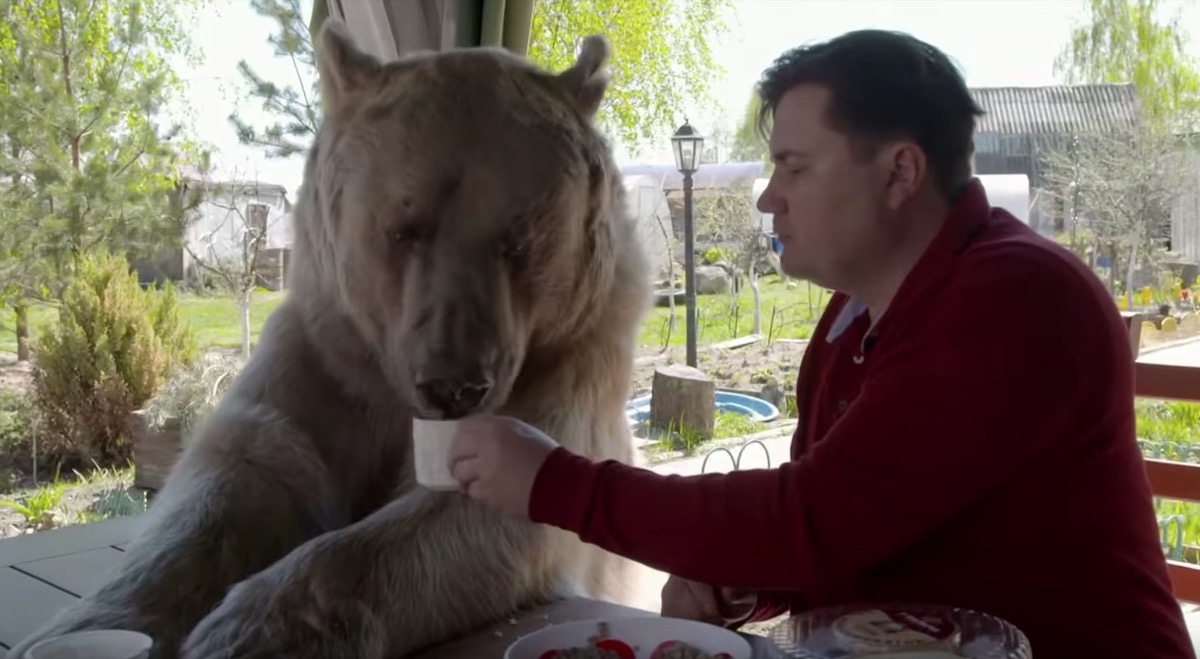 a man and his pet bear eating breakfast adorable photos of bears