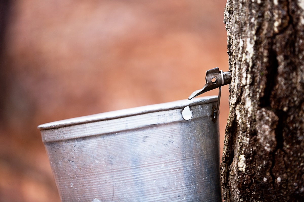 maple syrup tree tap, most common street names