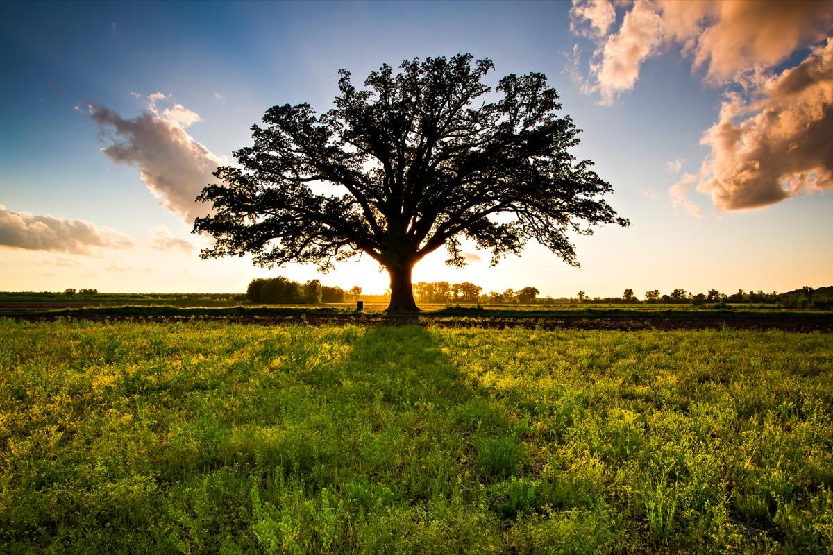 missouri big oak tree, most common street names