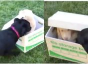 dog surprised with puppy viral video