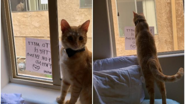 simon cat love story