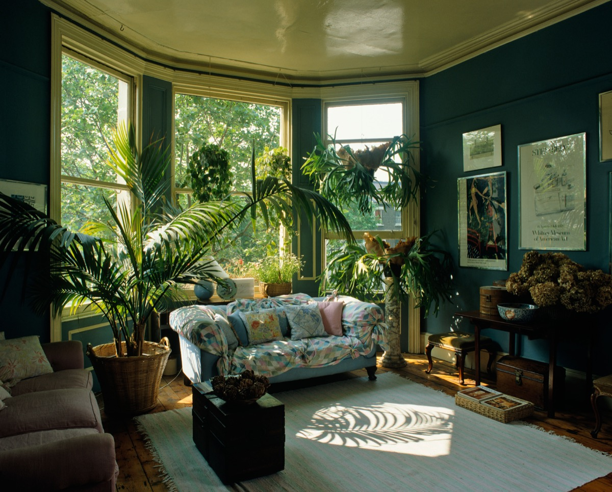B6D7D5 Eighties Style Living Room Interior with plants everywhere