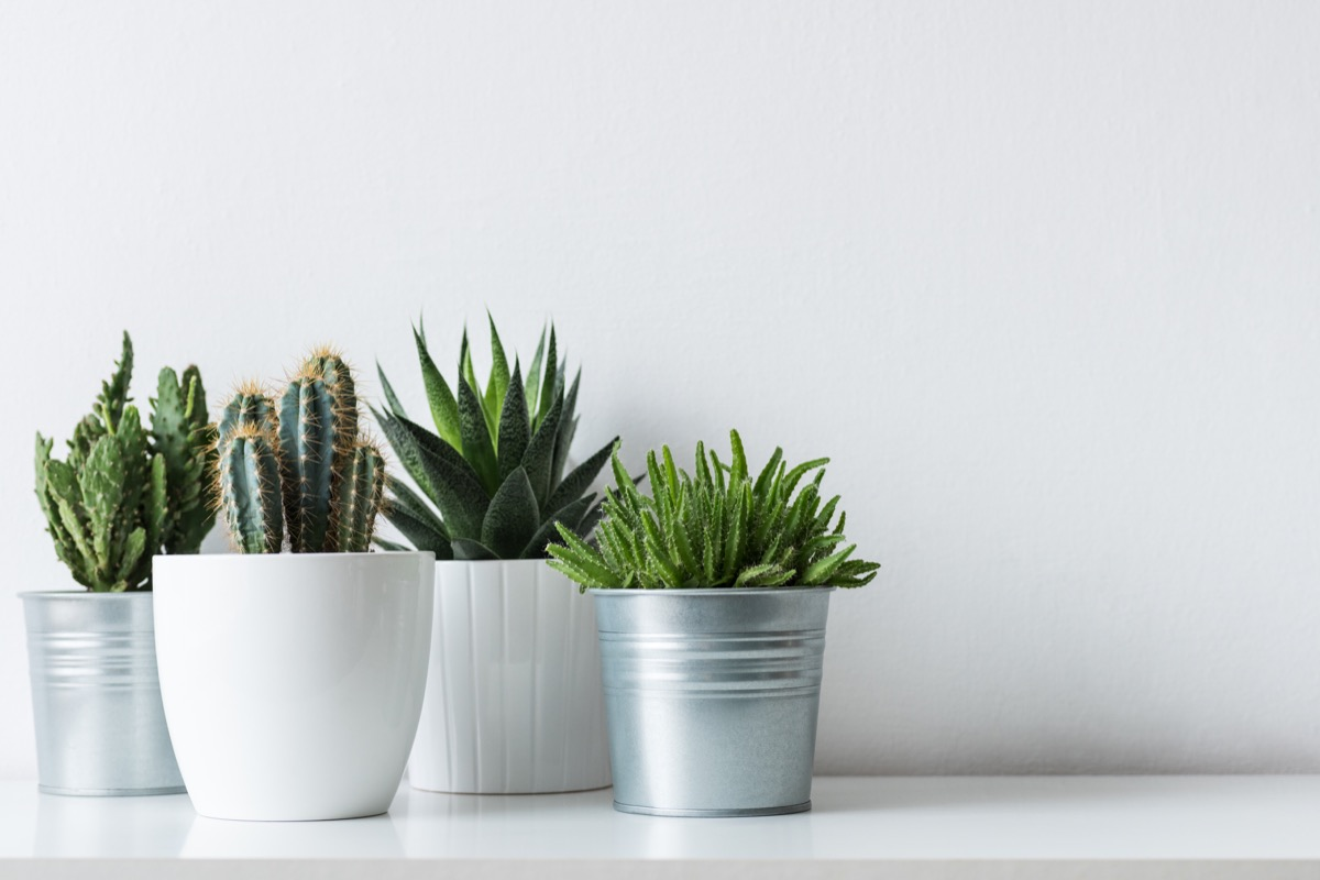 potted plants grouped together on shelf in home