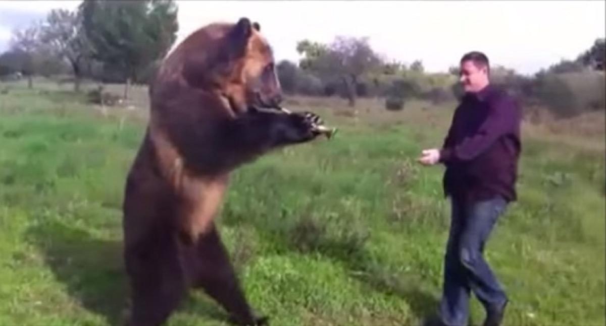 russian bear shows off tricks adorable photos of bears