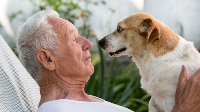 dog gazes lovingly into the eyes of elderly owner as he sits on his chest.