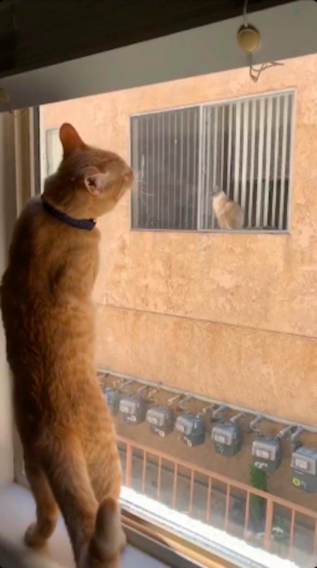 simon the cat love story