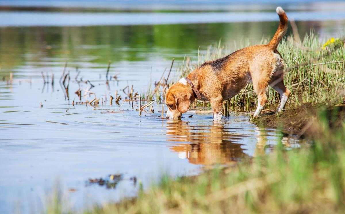 dog at the pond, dad jokes