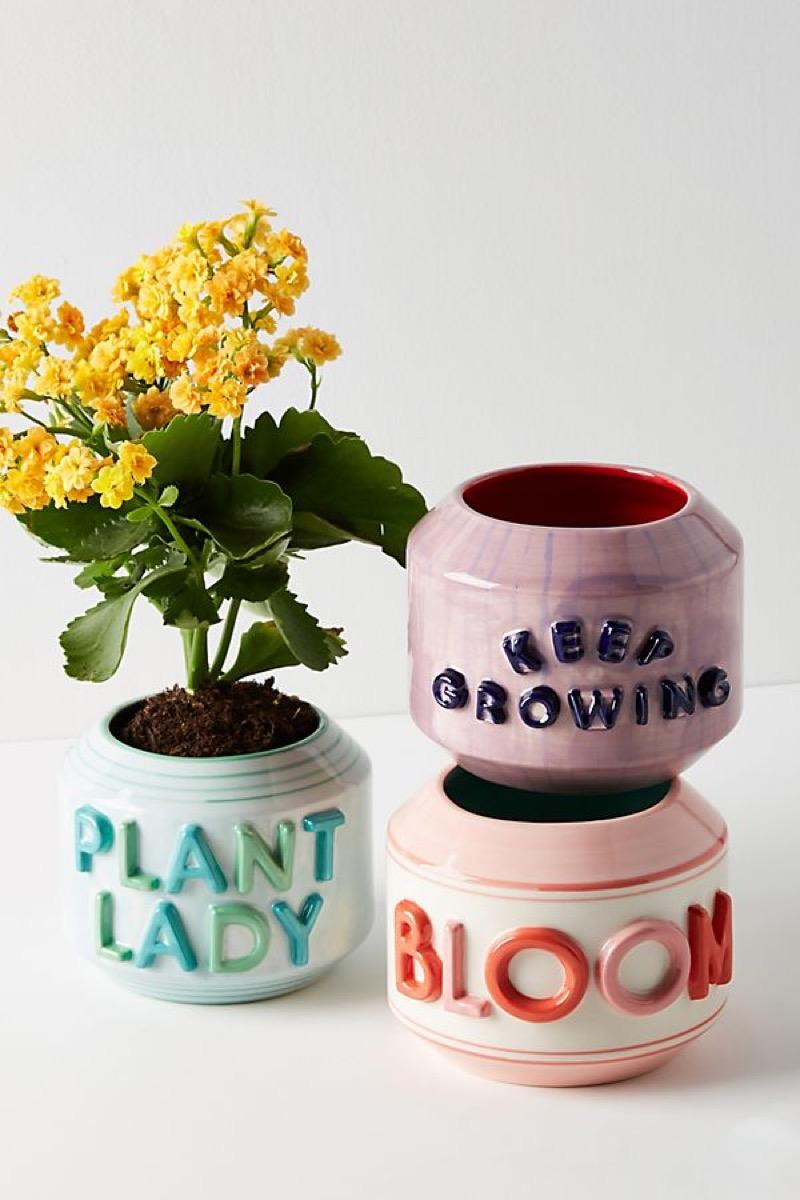 garden greeting pots, amazing summer buys