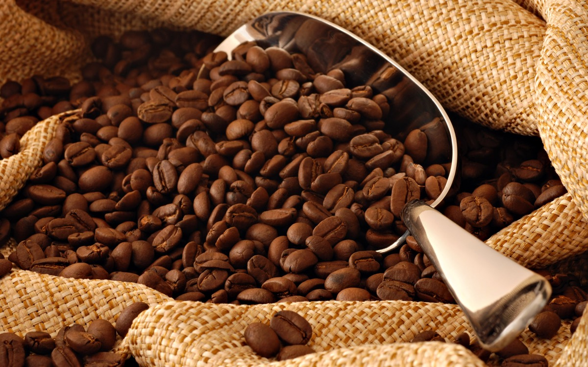 Kopi Luwak Coffee Most Expensive Things on the Planet