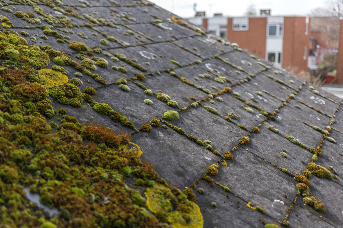 moss-covered roof