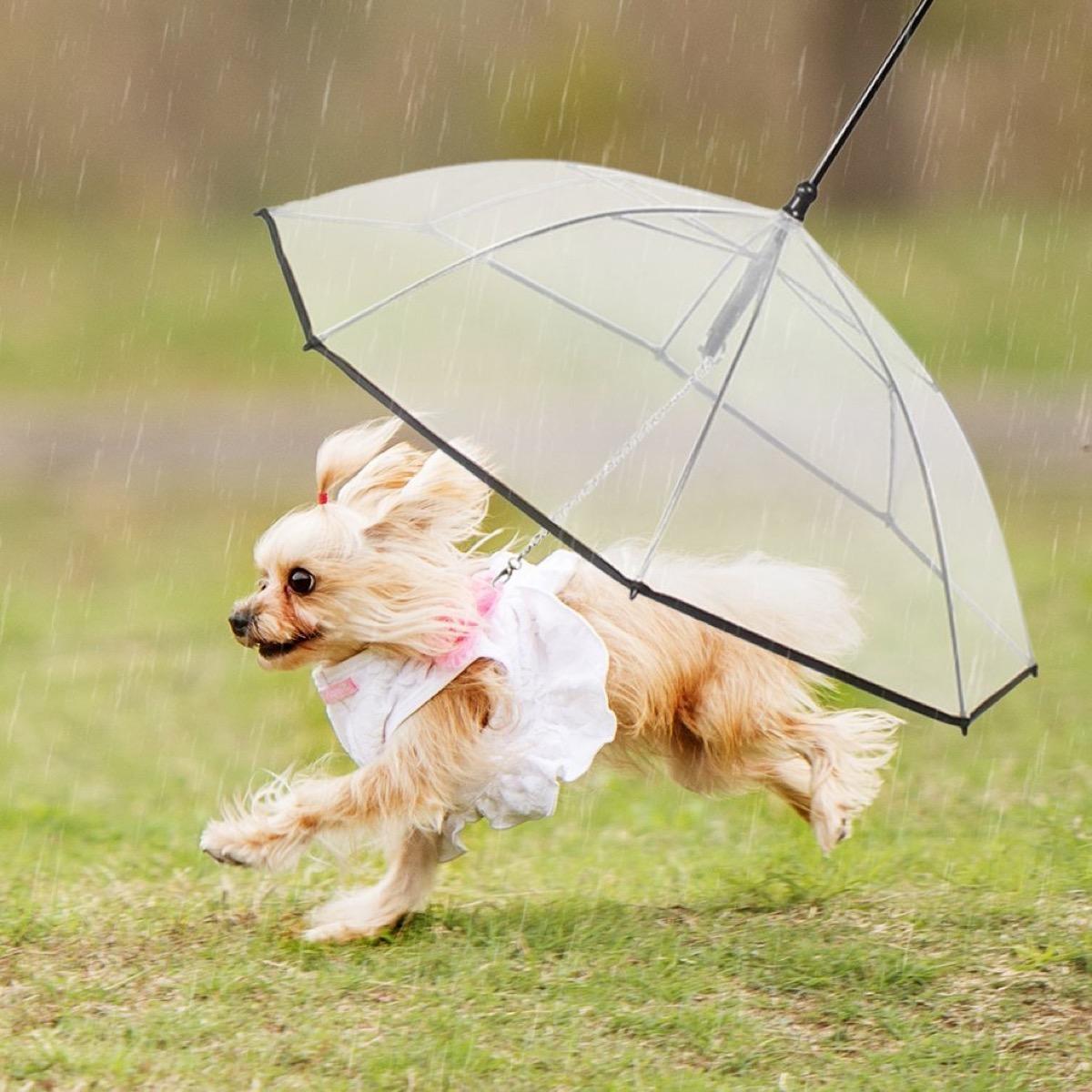 pet dog umbrella