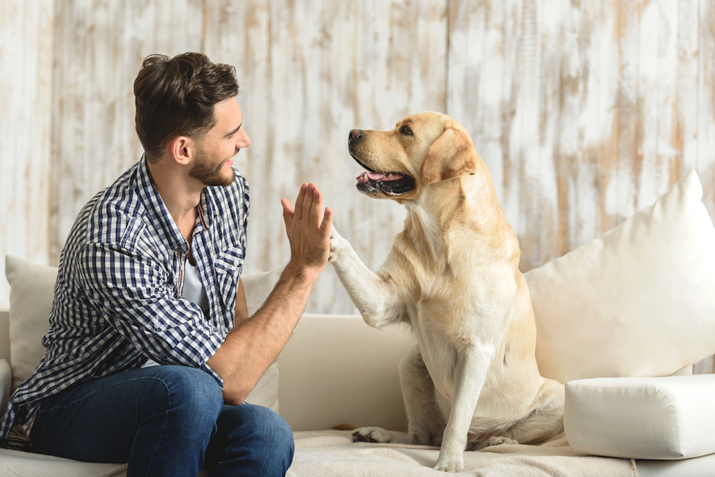 study finds some people are more biologically predisposed towards dogs, make yourself more attractive