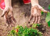 Woman Gardening With Dirty Hands Hand Sanitizer and Soap