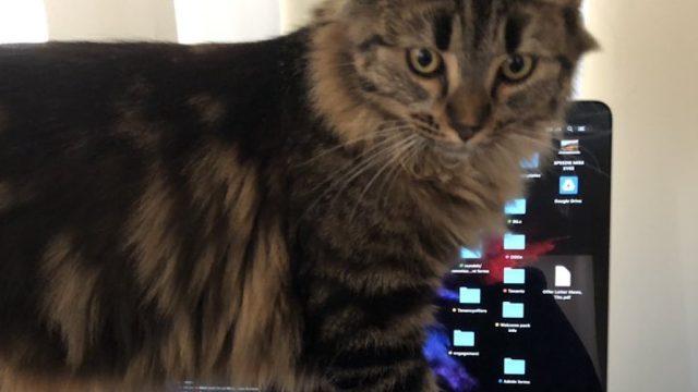 cat walking over keyboard