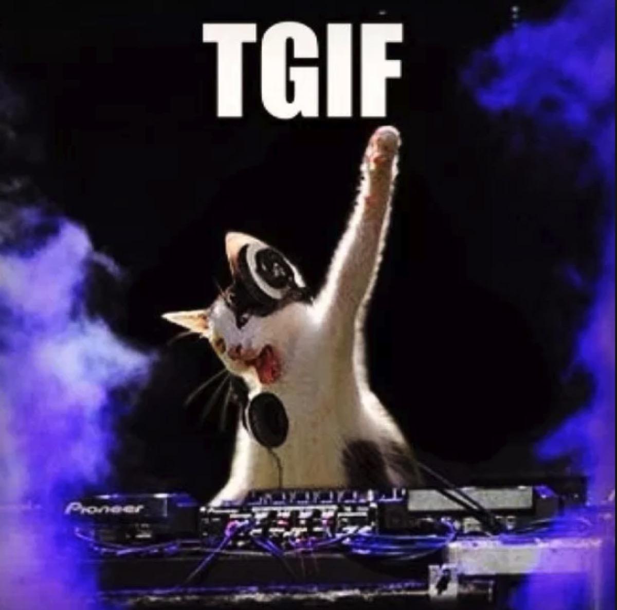 TGIF kitten friday meme