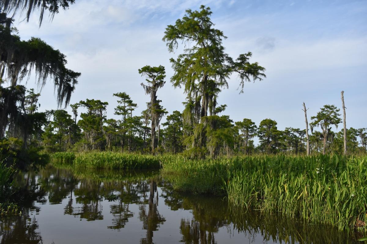 barataria preserve louisiana state natural wonders