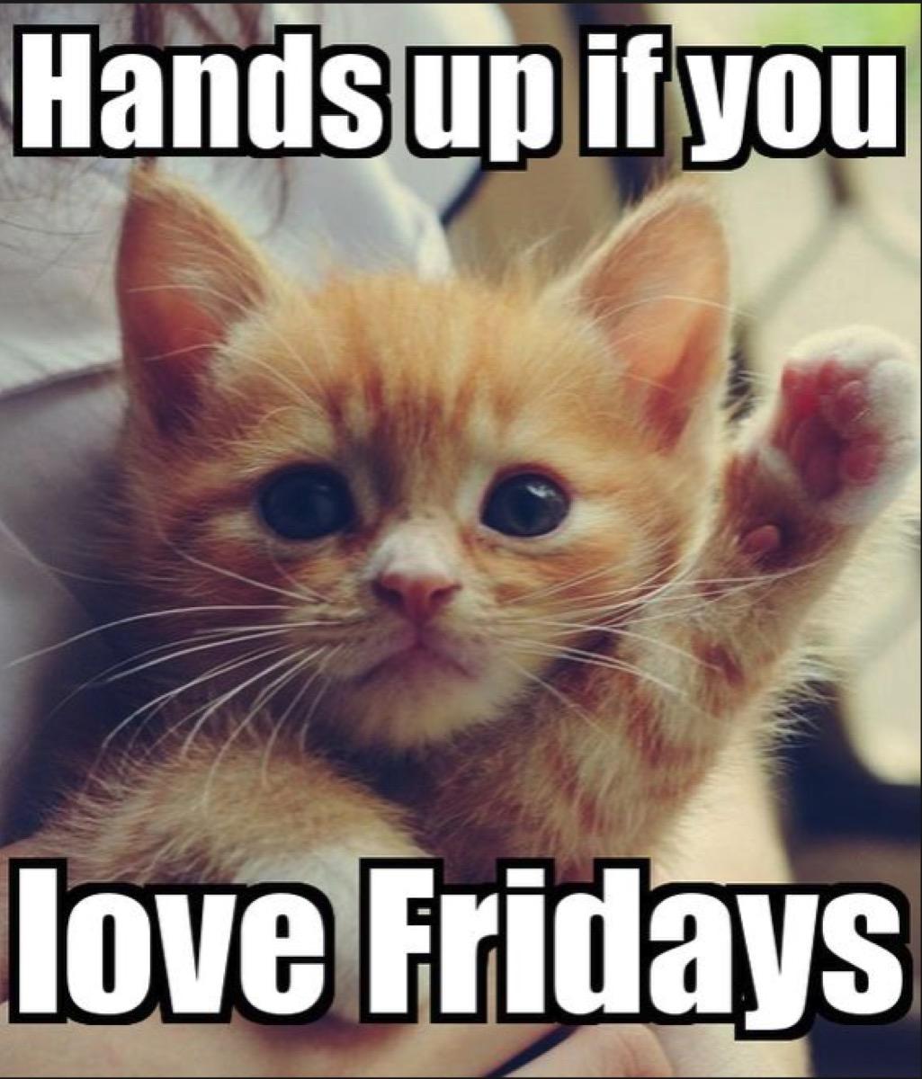 cat who loves friday meme