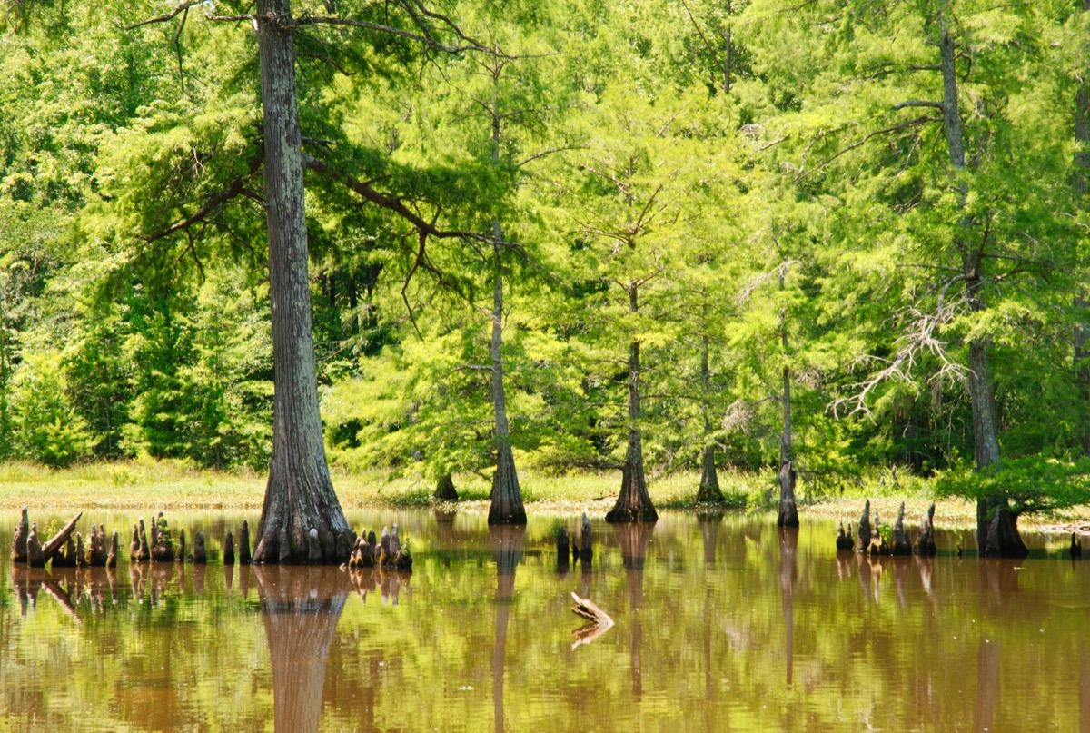 cypress preserve mississippi state natural wonders