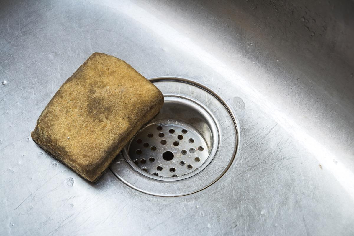 dirty sponge in sink