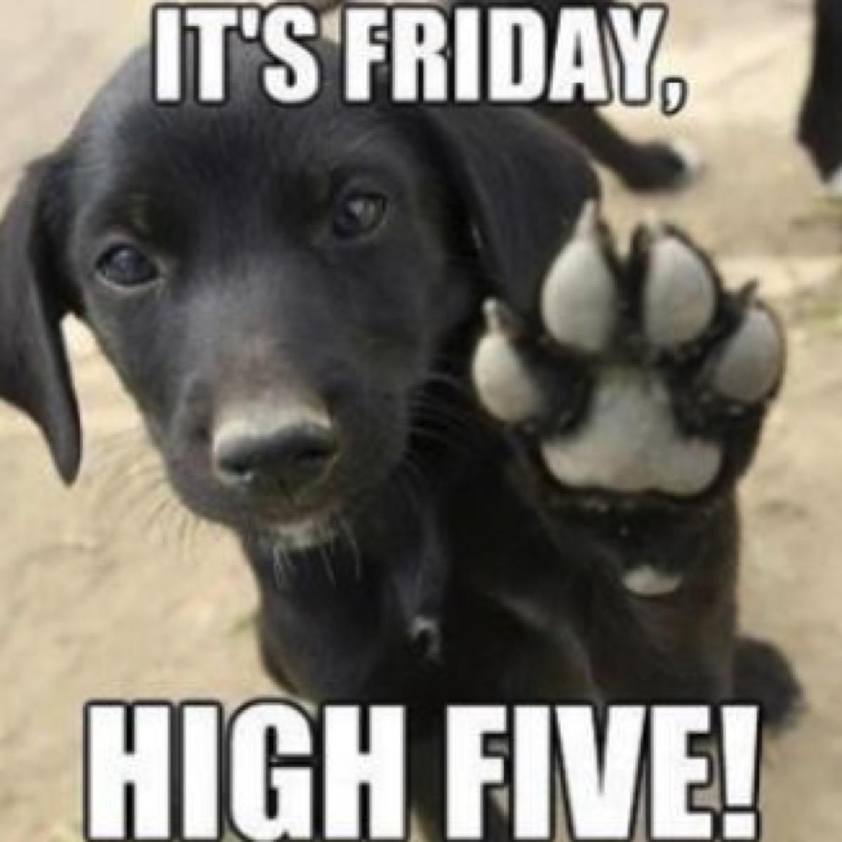 dog high five friday meme