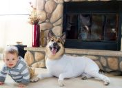 dog onesie Shed Defender Amazon