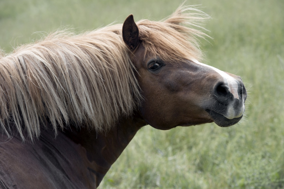 horse looking back at the camera