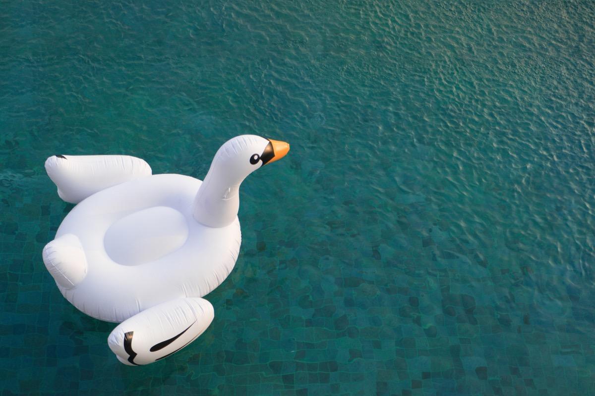Inflatable swan float in pool