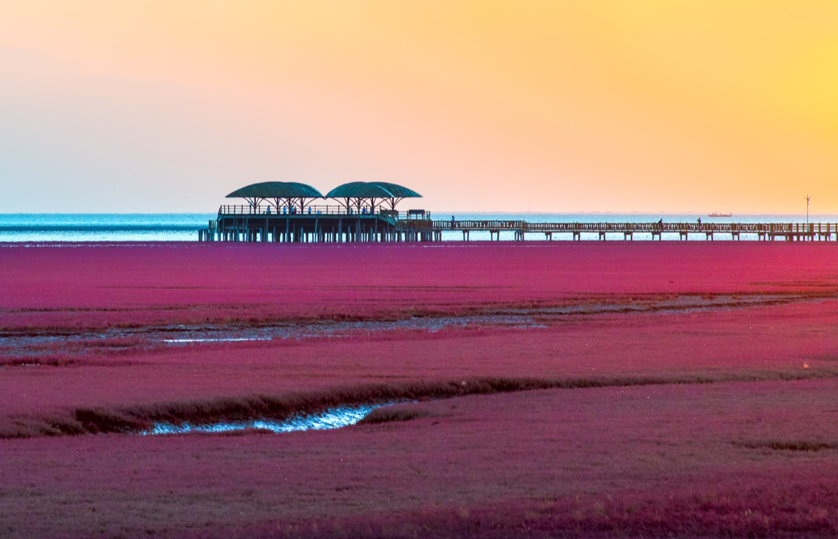 A red beach in China during sunset