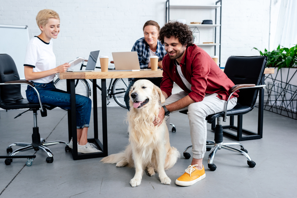 bring your dog to work things you never knew dogs could do