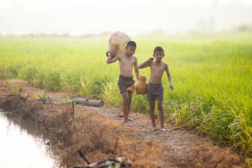 two asian boys walking through rice field