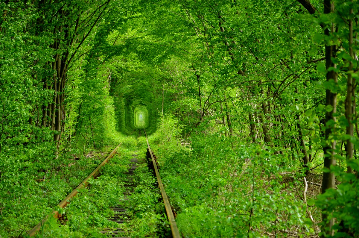 a lush green enclosed tunnel in the forest