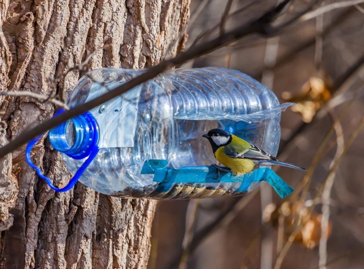 A Water Bottle Bird Feeder Reuse Disposable Items