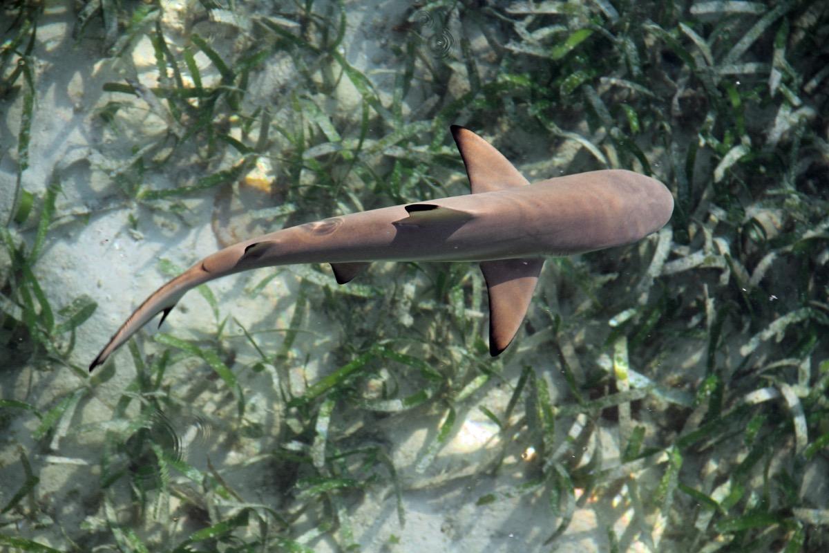baby shark swimming above plants