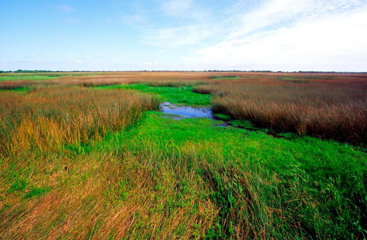 the cameron parish marshes Louisiana