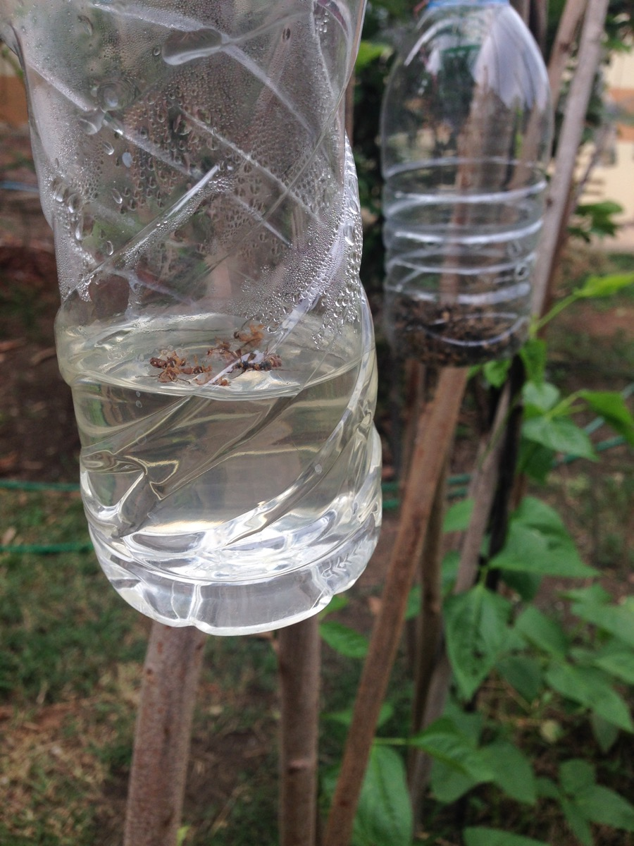 water bottle diy insect trap water bottle second uses