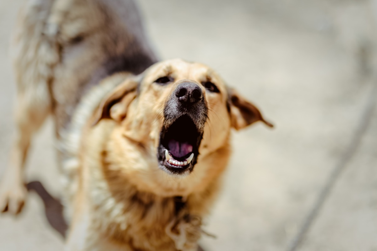 dog barking, weird state records