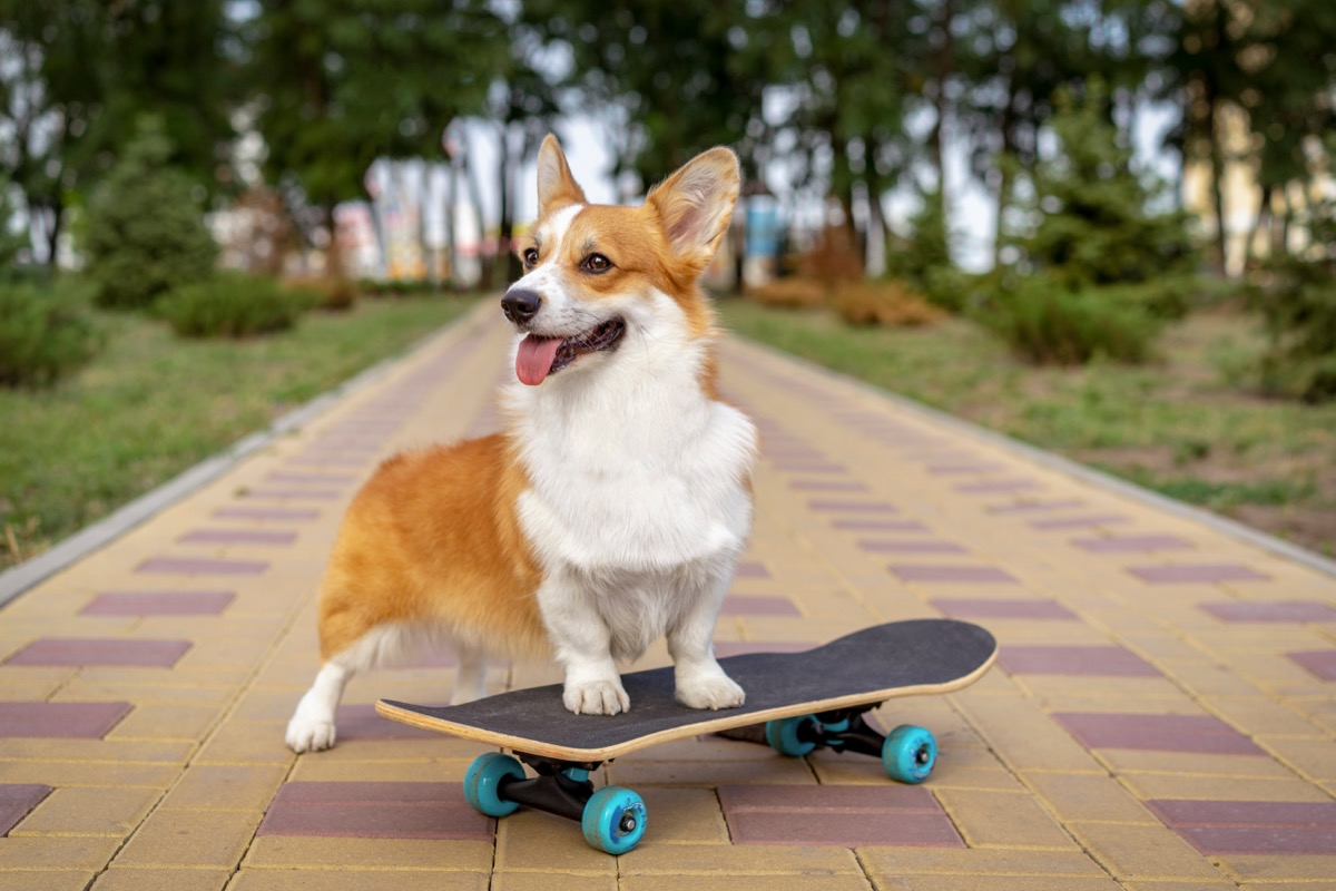 dog on a skateboard, weird state records