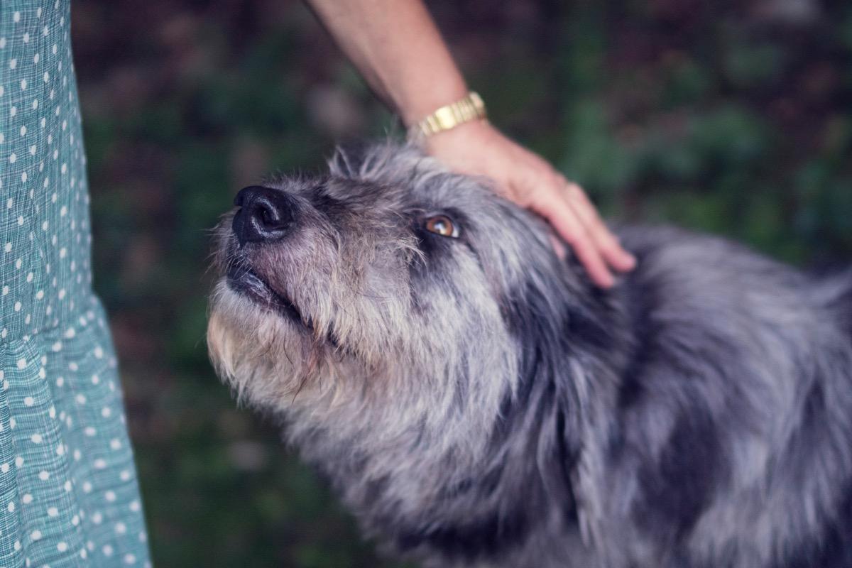 dog smelling owner smart person habits