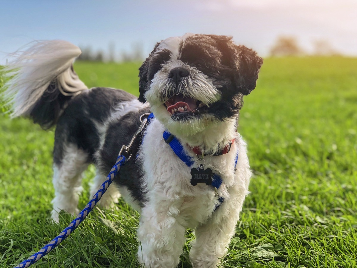 dog walking on leash things you never knew dogs could do
