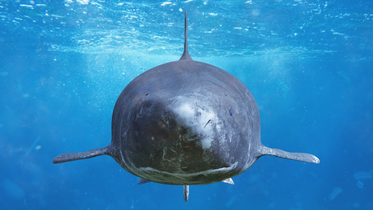 greendland shark