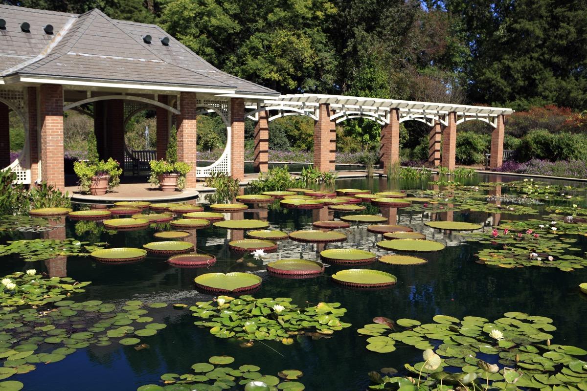 Water Garden at the Huntsville Alabama Botanical Gardens