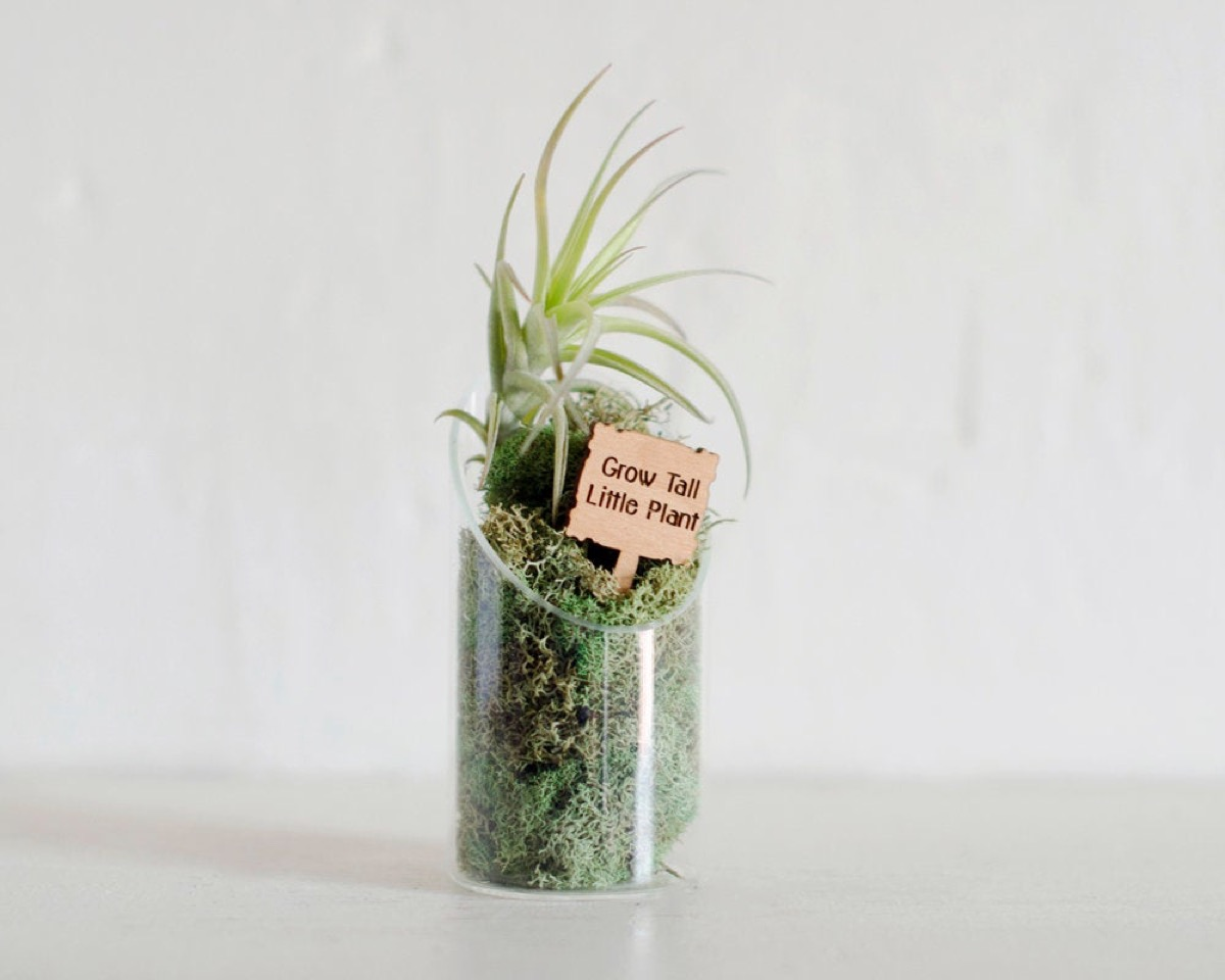 personalized terrarium, best friend gifts